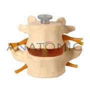 Vértebras Lombares 2 Peças - ANATOMIC - Cód: TGD-0153-A