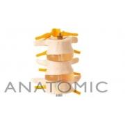 Vértebras Lombares 3 Peças - ANATOMIC - Cód: TGD-0153-B