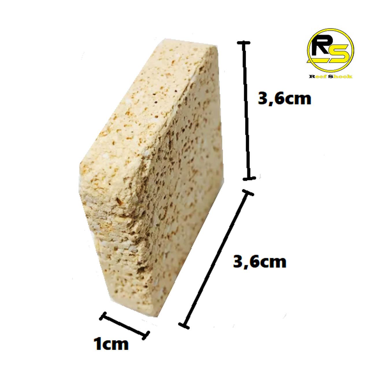 Base para Coral em Ceramica 3,6 x 3,6 x 1 cm kit 20 unidades