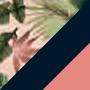Estampa Tropical Clara, Azul Escuro e Rosa Chiclete