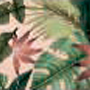 Estampa Tropical Clara