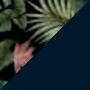 Estampa Tropical e Azul Escuro