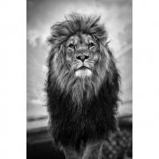 Quadro Decorativo Leão