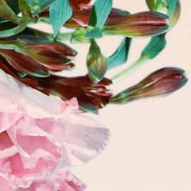 Painel flora III  | Márcio Simnch