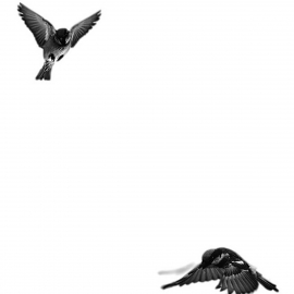 Painel pardal branco e preto | Snijder E Co