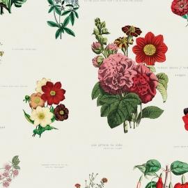 Papel de parede flores para você | Flo