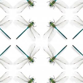 Papel de parede libéllula multicolorido | Snijder E Co
