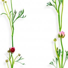 Papel de parede ranunculus listra | Snijder e Co