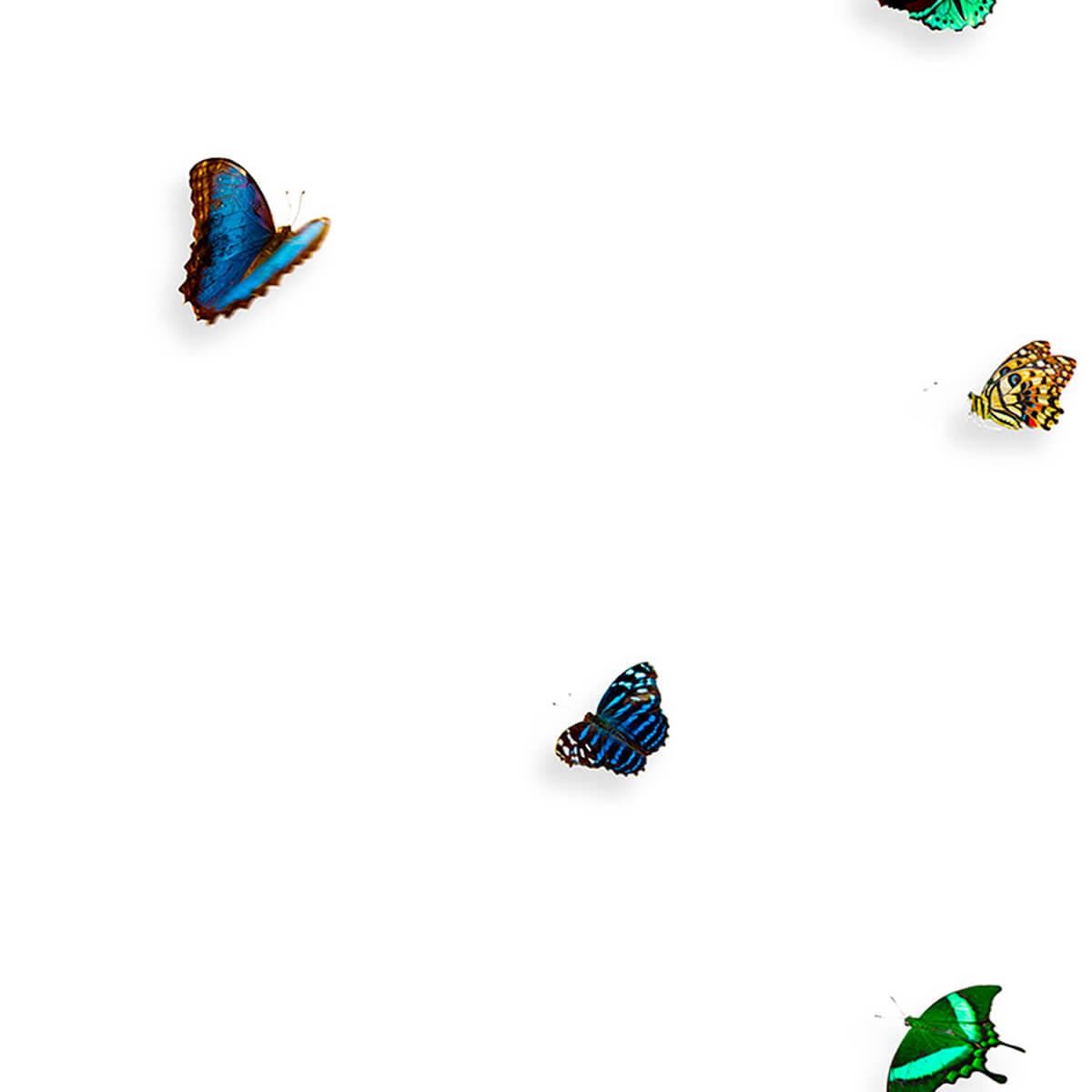 Painel borboleta multicolorido   Snijder E Co