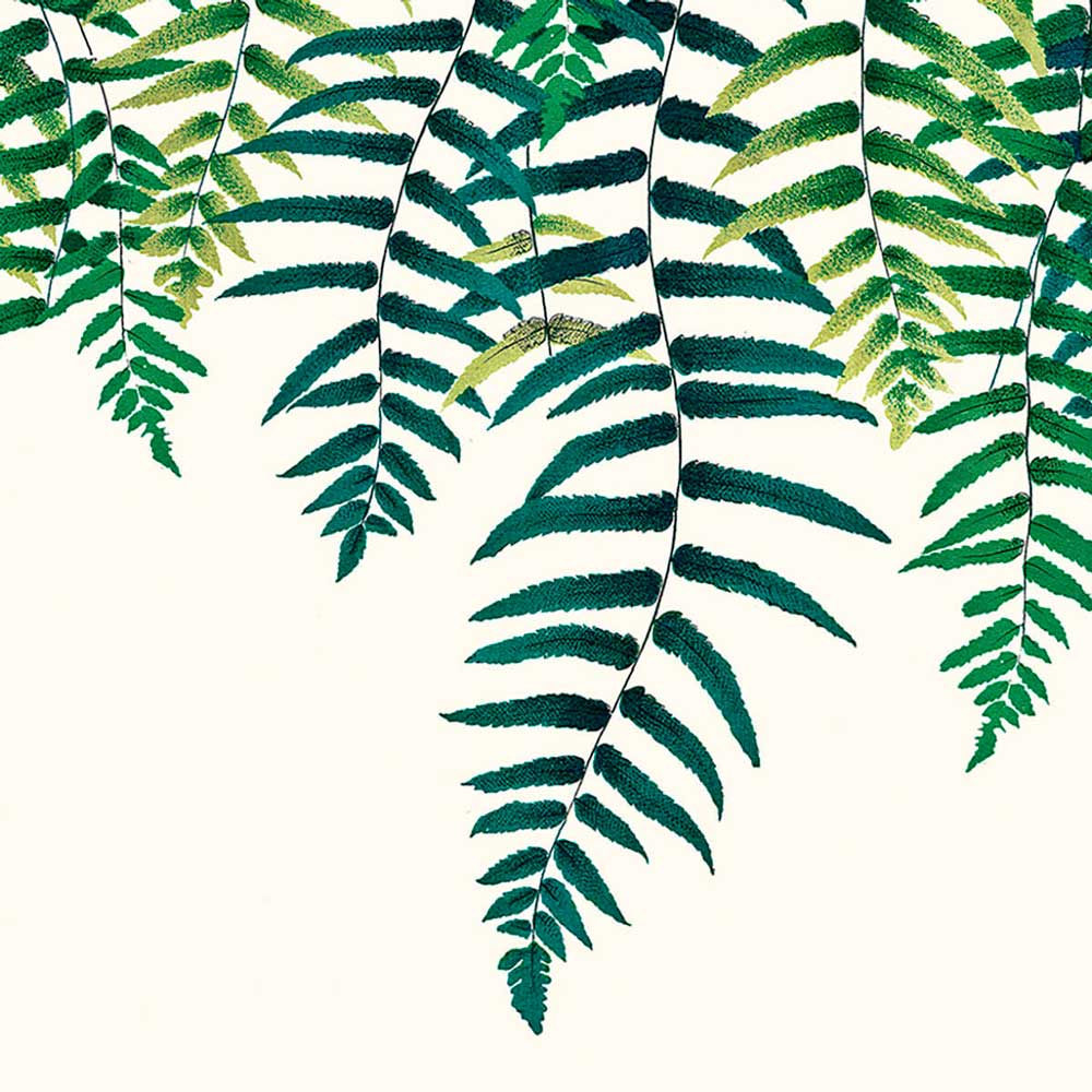 Papel de parede samambaia verde | Attilio e Gregório
