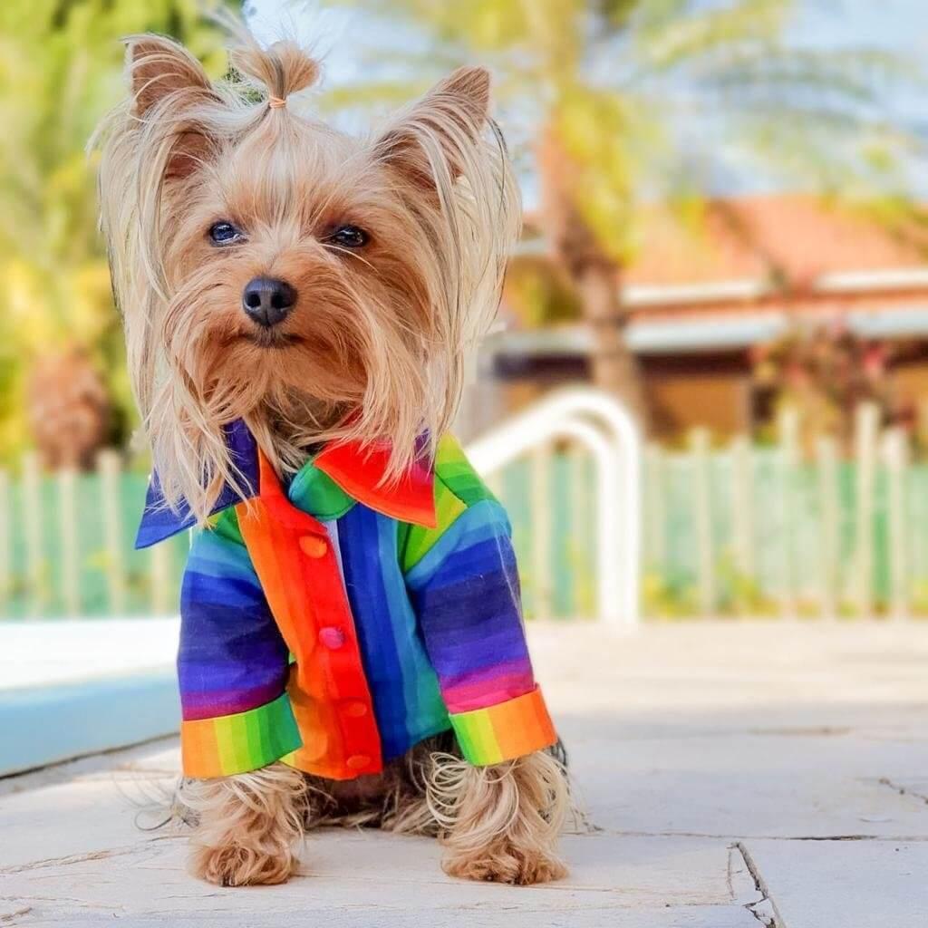 Camisa Pride