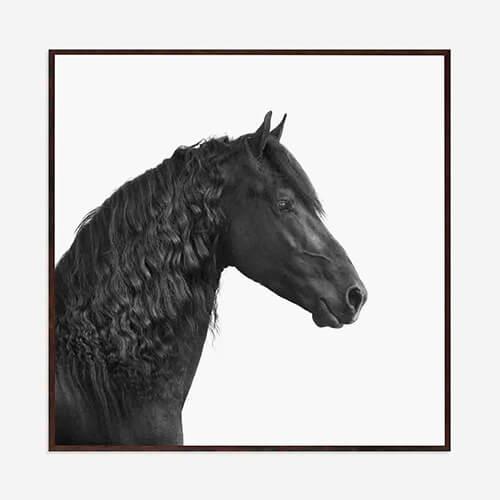 Quadro Horses