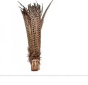 Faisão Ringneck Natural  50/55 cm