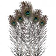 Pena de Pavão Natural 10 Unidades  - Natural