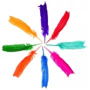 Penas De Pato Coloridas 60 Unidades