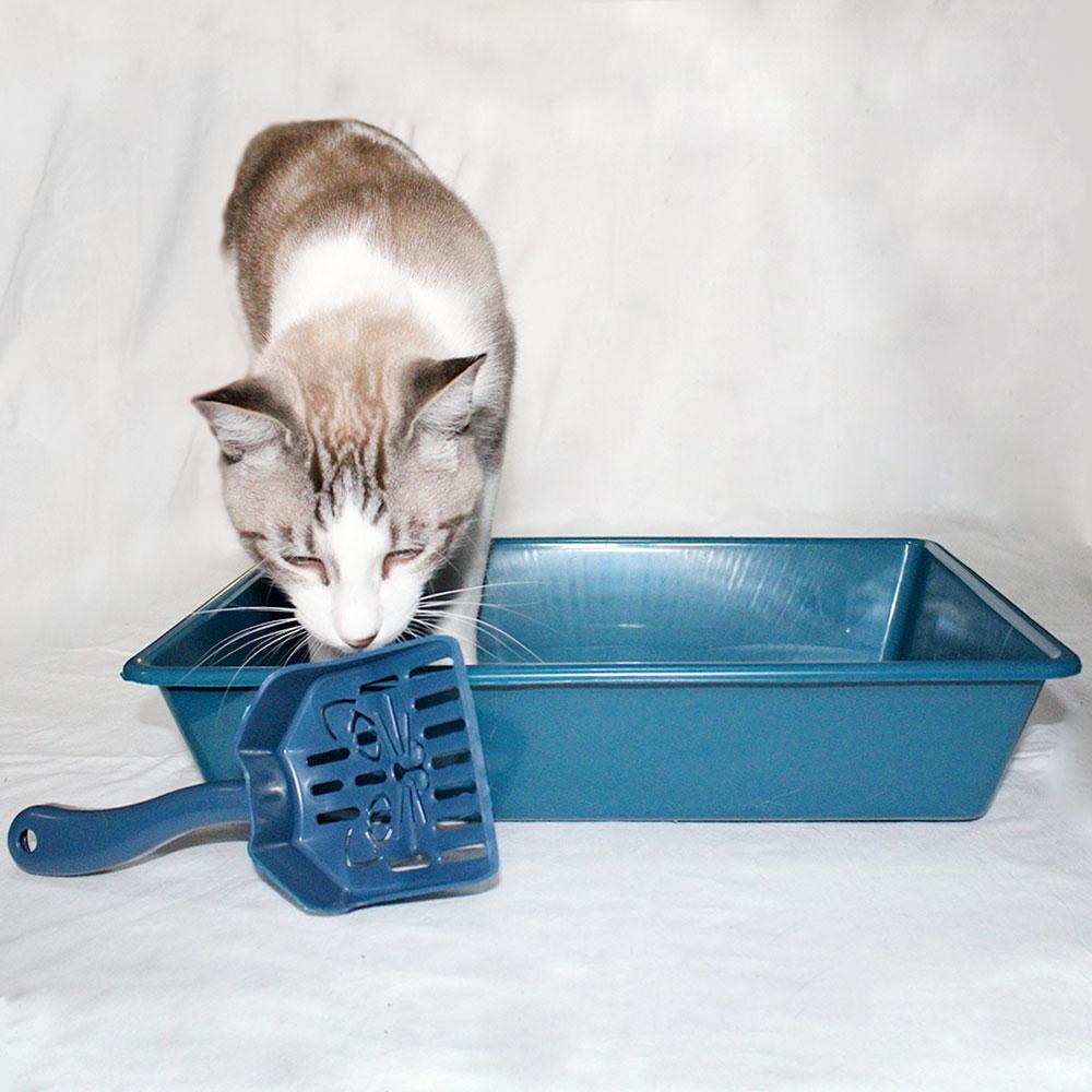 Bebedouro Gato 1,5L Tipo Fonte + Acessórios 3D