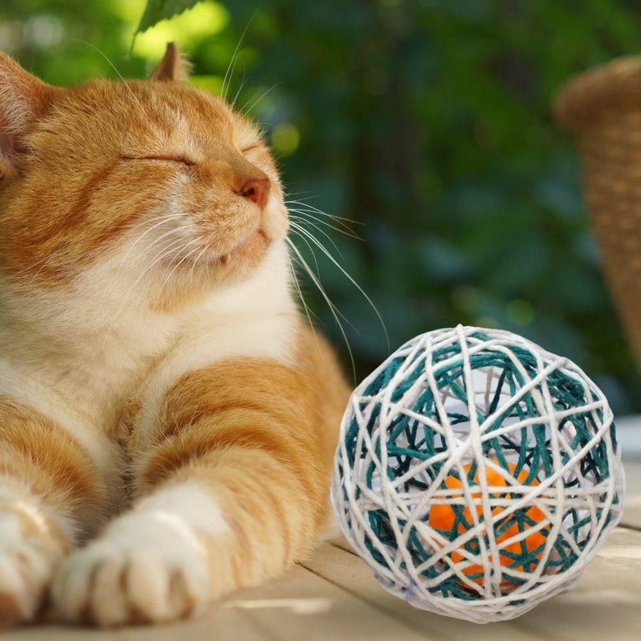 Brinquedo para Gatos Bolinha Interativo Pet Oferta + Brinde