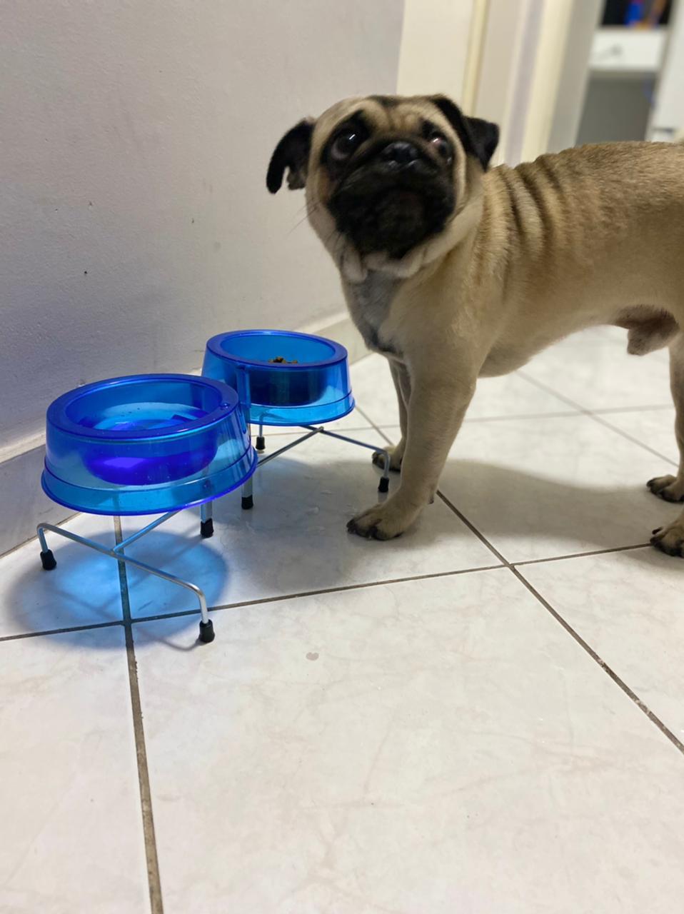 Comedouro e Bebedouro Pet Duplo Cães e Gatos P Azul Glitter