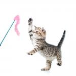 Varinha para Gatos Marabu Pena Sortido