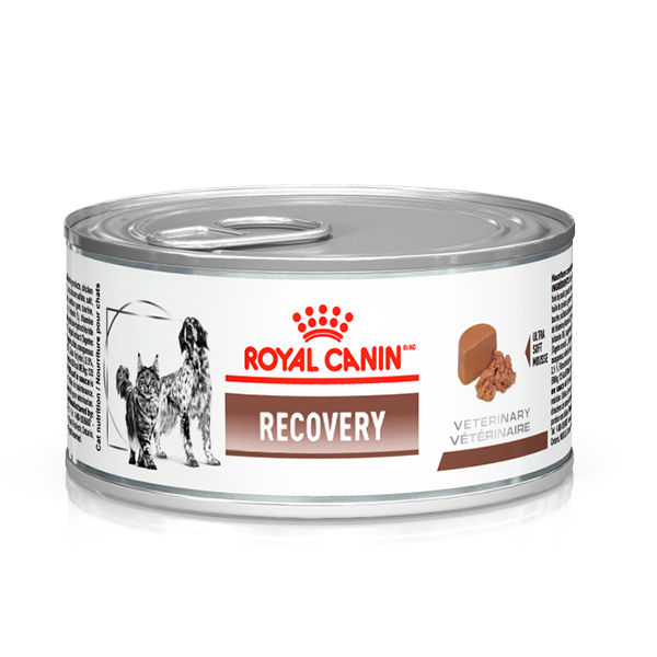 Ração Úmida Royal Canin Lata Veterinary Nutrition Recovery Wet Para Cães e Gatos 195g
