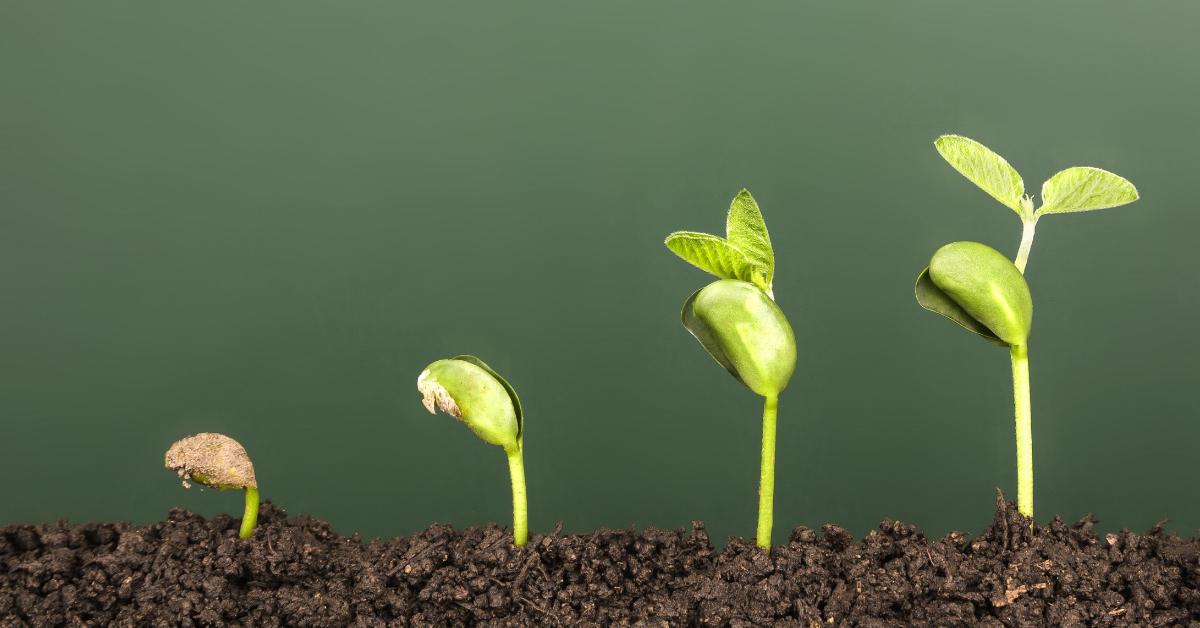 Quais são as 4 fases de uma startup? Entenda aqui